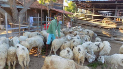 """Theo dấu chân dân du mục về """"Thánh địa"""" của những bầy cừu"""
