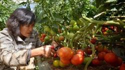 Tích tụ đất đai trong nông nghiệp: Kinh nghiệm từ xứ sở hoa anh đào