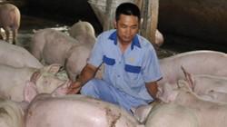 Giải cứu giá lợn: Cứu nông dân bây giờ còn hơn đi chùa làm từ thiện