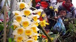 Ngắm khu bán hoa lan độc đáo ở chợ phiên Bắc Hà