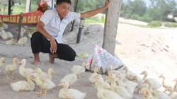 Có khùng không khi bỏ lương 20 triệu về nuôi vịt biển?