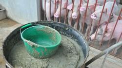 """Không thể để giá lợn hơi giảm mà người dùng vẫn phải """"gánh"""" giá cao"""