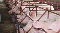 Đồng Nai chia sẻ cách giải cứu thịt heo: Bình tĩnh, tránh bán tháo