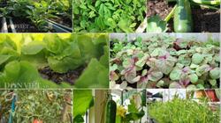 10 loại rau, quả dễ trồng nhất và nhanh cho ăn nhất vào mùa hè