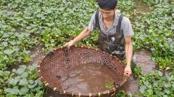 Ninh Bình: Độc đáo nghề đi vớt cua đồng, mỗi ngày kiếm 500.000 đồng