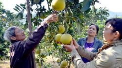 Tuyên Quang: Khuyến khích mỗi xã, phường xây dựng một sản phẩm