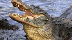 Bị cá sấu cắn 7 phát, bé 10 tuổi tự tay giải cứu mình