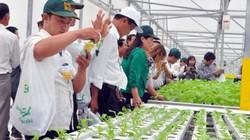 Nông dân Việt Nam xuất sắc phải đạt ít nhất 2 trong 4 tiêu chí