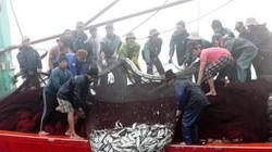 Ngư dân Quảng Bình thu hơn nửa tỷ đồng từ chuyến đi biển Hoàng Sa