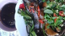 Chuột đồng chiên xả ớt và lươn um rau ngổ đốn tim du khách đến Cà Mau