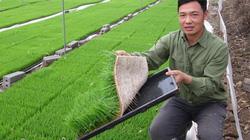 Chàng trai Hải Dương 40 tuổi sở hữu 70 mẫu ruộng, lãi 1 tỷ đồng/năm
