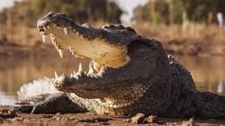 Đi trên nước, mục sư châu Phi bị 3 cá sấu ăn thịt