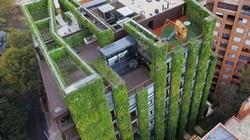 Tòa nhà 11 tầng mát rượi nhờ phủ kín cây xanh