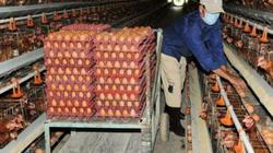 """""""Thủ phủ"""" gà Đồng Nai """"thất thủ"""", nông dân lỗ tới 8.000 đ/kg"""
