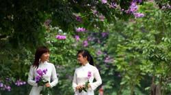 """3 con đường bằng lăng """"check in"""" tuyệt đẹp ở Hà Nội"""