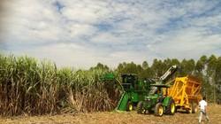 Khối lượng đường tồn kho khủng khiếp 750.000 tấn: Lỗi tại ai?