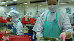 Triển vọng thị trường nông nghiệp Việt 2017: Lo nhất là lúa gạo