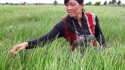 Trồng cây tiền tỷ: Nghề trồng kiệu thu lãi 200-300 triệu đồng/ha