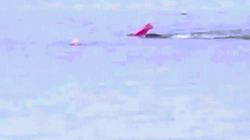 Mỹ: Đang chèo thuyền, bị cá mập lao đến hất xuống nước
