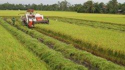 Đề xuất sốc: Chấp nhận để nông dân mất đất khi tích tụ đất đai