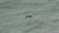Tìm thấy xác thầy giáo ở Thanh Hóa trôi dạt trên vịnh Hạ Long