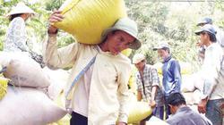 Hạt gạo Việt Nam: Nông dân nghèo trên vựa hạt ngọc trời