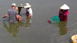 """Nông dân Trường Định bán tôm không kịp nhờ nuôi tôm """"3 không"""""""