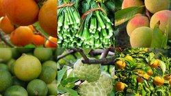 Đến Lạng Sơn, đừng bỏ lỡ 10 loại rau quả đặc sản này