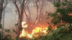 HN: Cháy lớn rừng phòng hộ Sóc Sơn, huy động 2000 người dập lửa