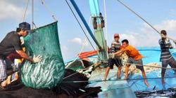 Khai thác thủy sản phải có hạn ngạch: Cấp phép đánh bắt 60 tháng