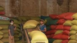Giá nông sản hôm nay 7.6: Trữ tiêu chờ giá, nông dân mất nghìn tỷ