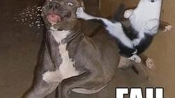 """Tai nạn """"trớ trêu"""" của những chú cún siêu quậy"""