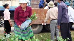 Huyện tinh giản ban bệ, nông dân giảm nghèo nhanh