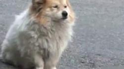 Chủ vào viện dưỡng lão, chú chó vẫn ở nhà chờ trong 3 năm