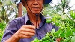 Clip:Cuộc sống vườn tược của nguyên Phó thủ tướng Trương Vĩnh Trọng