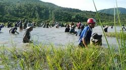 Hàng trăm người đội nắng tham gia lễ hội đánh cá cầu may độc đáo