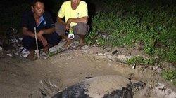 Bình Thuận: Bảo vệ rùa  mẹ 90kg vào ổ đẻ ngay 108 trứng