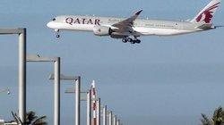 Doanh nhân muốn cho 4.000 con bò ngồi máy bay tới Qatar để lấy sữa