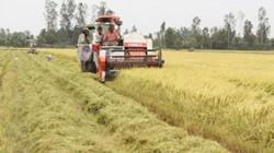 Dự báo lũ về sớm, ĐBSCL không nên mở rộng trồng lúa thu đông