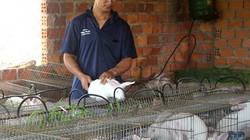"""Trai tuổi dê, nuôi thỏ có đệm lót sinh học, """"bỏ túi"""" 150 triệu/năm"""
