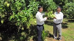 Mùa thu hoạch trái cây và điệp khúc: trồng- chặt-trồng...