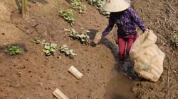 Dùng bẫy cực đơn giản để bắt cáy, nông dân thu 5 - 10 triệu/tháng