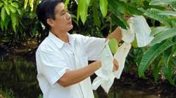 Lão nông giúp xoài Đồng Tháp vang danh hơn trăm nước
