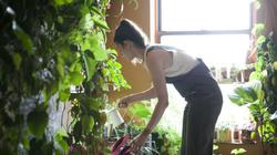 """""""Nông dân phố"""" xinh đẹp trồng 160 loại rau, quả khắp nhà rộng 120m²"""