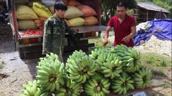 """Mới nghe tưởng khùng: Bỏ nghề """"oách"""" vào núi trồng 5ha chuối Thái Lan"""