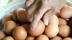Bi đát trứng gà VietGAP rẻ hơn trứng gà thường