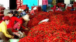 """Khánh thành nhà máy ớt bột 650.000 USD: Dân hết lo """"khóc"""" vì ớt?"""