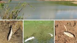 Hà Tĩnh: Cá lóc chết bất thường trong hồ nước sinh hoạt 1 tuần
