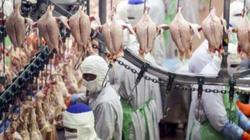 Xuất khẩu thịt: Bài học đau thương và đắt giá của Thái Lan