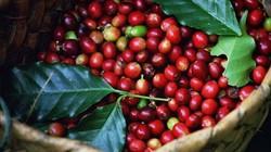 """Giá nông sản hôm nay 1.7: """"Ngày thần tài"""" của giá cà phê; giá tiêu không đổi"""